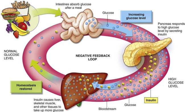 how insulin effects digestion Effect of protein ingestion on the glucose and insulin response to a standardized oral glucose load.